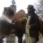 """Baikal """"hilft"""" beim Putzen"""