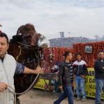 Nichts für Vegetarier: Kamelwurst
