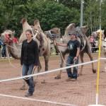 Kamelrennen Döggingen (Kuthan, Hemangi, Gambai)