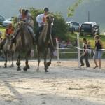 Kamelrennen Rothenfluh (Sambal, Farouk, Gambai, Hemangi)