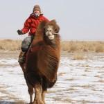 Ausritt in der Gobi