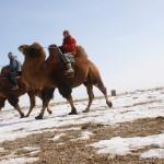 Kamelritt in der Gobi (Karin und Ulli)