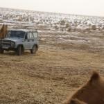 Jurassic Park in der Gobi