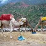 Noch mehr Touri-Kamele