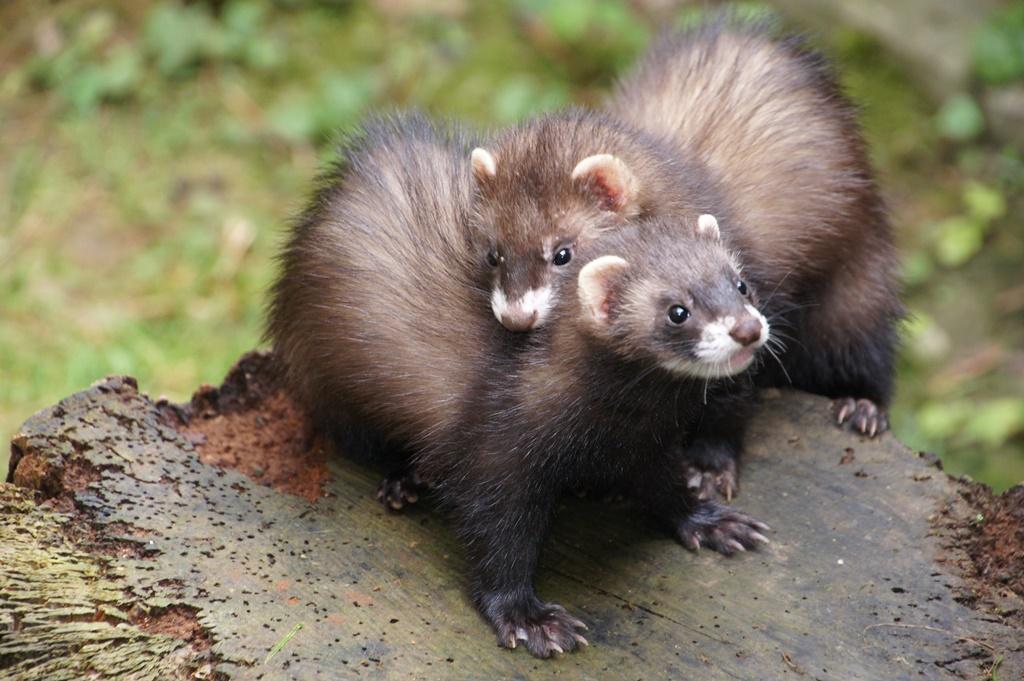 20minuten News Von Jetzt In Webapp Format Tiere Jungtiere Igel
